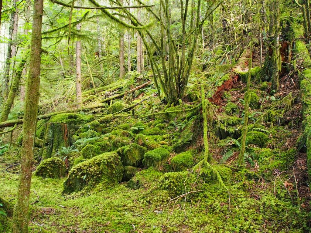 Alcune scene con il gruppo di trapper sono state girate qui, in un luogo chiamato Shovehouse Creek, anche detta Foresta pluviale Squamish.