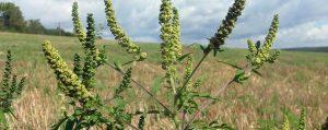 Le erbe e la libertà: elogio delle vagabonde.