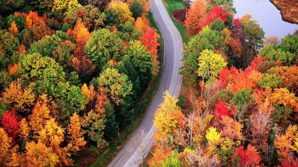 foliage cover