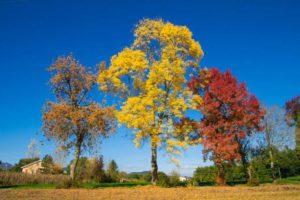 foliage Parco dei Sibillini