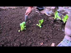 concimazione dell'orto