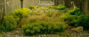 «Giardino del Terzo Paesaggio» sul tetto della vecchia base sottomarina di Saint-Nazaire (Francia)